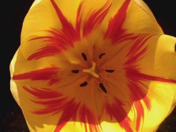 oil flower 2